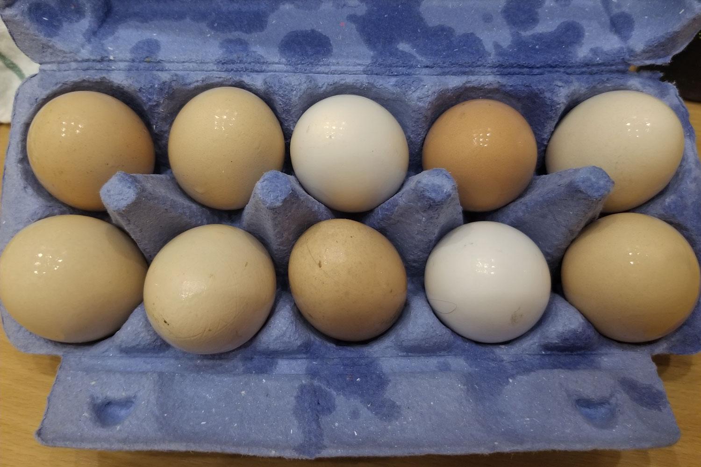 Hungary-Budapest-Eggs-Ten-Pack